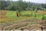Agricultural Land on Sale at Nayapati @ 2,50,000 per anna (Price Negotiable)